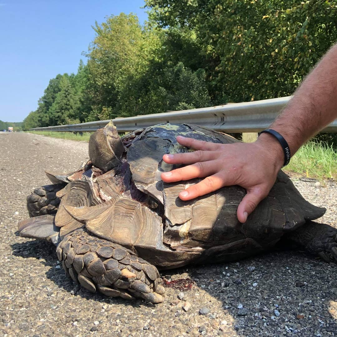 Carolina Waterfowl Rescue shares heartbreaking photo of dead tortoise found along NC road